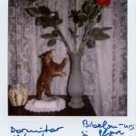 Polaroidul sau imaginea unicat